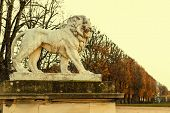 picture of garden sculpture  - Lion sculpture at the Luxembourg Garden - JPG