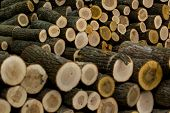 foto of woodstock  - Background of cut wood logs stacked in a pile - JPG
