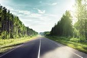 pic of cloud forest  - road in sunny forest - JPG