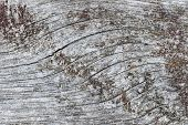 stock photo of lichenes  - Gray wooden background of weathered distressed unpainted rustic wood showing woodgrain texture and lichens - JPG
