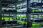 picture of hydroponics  - Plants are cultivated in hydroponic system - JPG