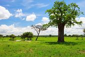 Tarangire Landscape In Tanzania