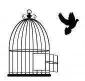 Постер, плакат: Bird Cage