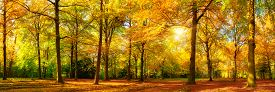 picture of greenery  - Gorgeous autumn landscape panorama of a scenic forest with lots of warm sunshine - JPG