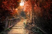Fantasy Autumn Forest With Path Way Through Dense Trees poster