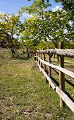 Wooden Fence And Trees