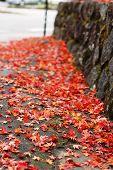 Autumn Street