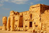 picture of euphrat  - ancient palmyra at early morning in syria - JPG