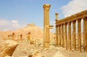 foto of euphrat  - historic columns at ancient palmyra in syria - JPG