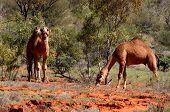 Australia Outback 58