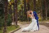Постер, плакат: Beautiful wedding couple happy bride and groom in nature