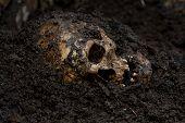 Real human skull as crime scene