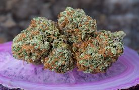 picture of agate  - Conspiracy Kush Medicinal Medical Marijuana on Purple Agate. ** Note: Shallow depth of field - JPG