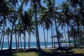 stock photo of seesaw  - Palms with seesaw on the beach in Bali Indonesia - JPG