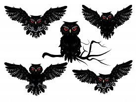 pic of owl eyes  - Cartoon black owl with red eyes detailed silhouette - JPG