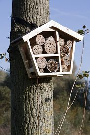picture of cocoon tree  - Solitary bee hotel is a shelter for different kind of insects - JPG