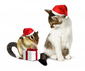 pic of laughable  - Funny christmas pet funny squirrel and cat with santa hat - JPG
