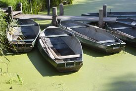 picture of green algae  - Rowboats moored at a jetty in water green of algae - JPG