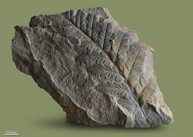 foto of paleozoic  - Prints of ancient plants that lived on earth 320 million years ago - JPG
