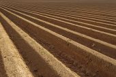 Plowed Agricultural Fields Prepared For Planting Crops In Normandy, France. Countryside Landscape, F poster