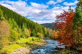Gorgeous Day Near The Forest River In Mountains poster