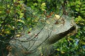 Moth Webs
