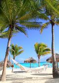 Caribbean beach hammock and palm trees in Mayan Riviera Mexico