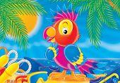 image of palm cockatoo  - children - JPG
