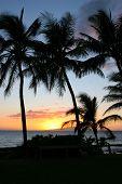 Silhuetas de palmeiras ao pôr do sol em Maui