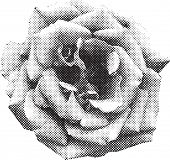 halftone rose in vector format