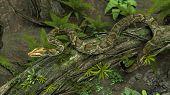 amazon python on tree trunk