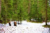 Pine Trees Surrounded By Snow Taken At An Alpine Forest On Mountainous Terrain In Rural Washington S poster