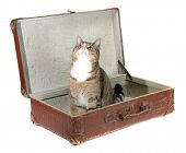 picture of snoopy  - fascinated little cat in old suitcase on white - JPG