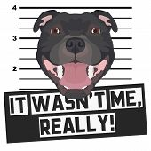 Illustration Mugshot Staffordshire Bull Terrier - The Guilty Dog ​​gets A Police Photo. Dog Lovers A poster