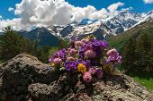 Bright Colored Field Bouquet Lies On Stone. Mountain Landscape. Mountain Flowers. Flowers Against Wh poster
