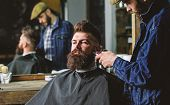 Hipster With Beard Covered With Cape Trimming By Professional Barber In Stylish Barbershop. Grooming poster
