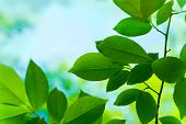 stock photo of green leaves  - green leaves as colourful background soft focus - JPG