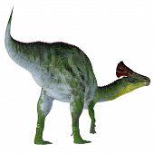 Olorotitan Dinosaur Tail 3d Illustration - Olorotitan Was A Duckbill Crested Herbivorous Dinosaur Th poster