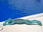 Frog Lying By The Pool At A Resort