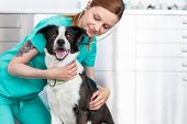 Young veterinary doctor examining dog at clinic poster