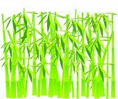 Bamboo.eps
