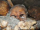 Catacombs Skull