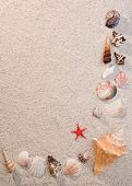 Frame Of Sea Shells And Starfish On Sand