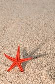 Starfish Casting Long Shadow On Golden Sand