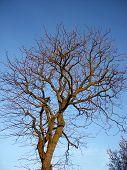 Tree And Sky 9