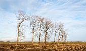 Linha de árvores nuas no Outono