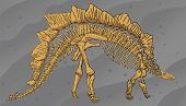 stock photo of dinosaurus  - Illustration of Dinosaurus Skeleton Diplodocus  - JPG