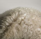 Sheepskin Rug Detail
