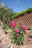 Onr Pink Flower