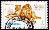 Postage stamp Romania 1964 Lions, Panthera Leo